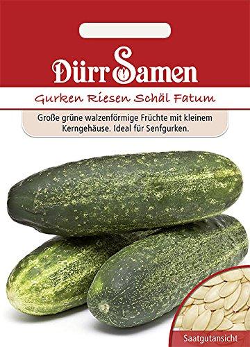 Dürr-Samen - 50 x Salatgurke