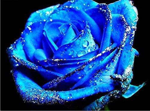 100pcs graines Rose, graines exotiques rares chinoise Rose Graines de fleurs pour les plantes de jardin à la maison, 24 couleurs 12