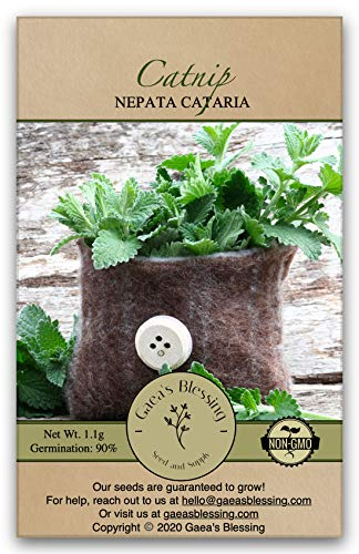 Gaea's Blessing Seeds – Catnip Seeds – Non-GMO Heirloom Seeds Nepata Cataria Open-Pollinated – with Easy to Follow Instructions – 90% Germination Rate Net Wt. 1.1g (Single Pack)