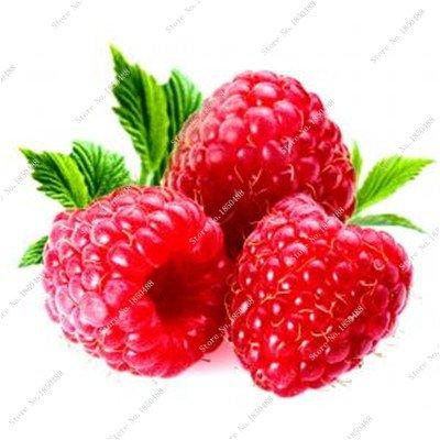 Bonsai framboise mûre graine noire Berry Blackberry vivace arbre plante délicieux Succulent Fruit meilleur cadeau pour enfant 400 Pcs 3