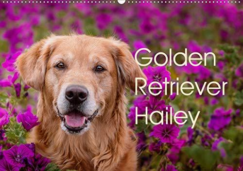 Golden Retriever Hailey Fotokalender (Wandkalender 2021 DIN A2 quer)