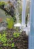 JARDLI Pollen Glass CO2 Diffuser for Aquarium Planted Tank (3/4' for Below 20 US gallons)
