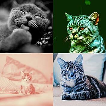 テクニカル-かわいい猫