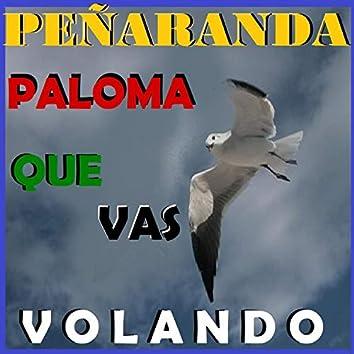 Paloma Que Vas Volando