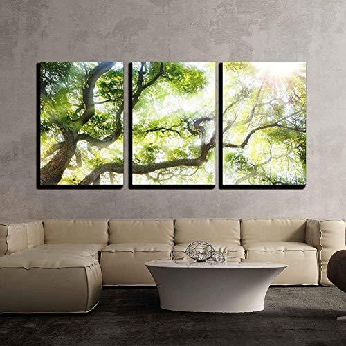 GYSS 3 Paneles Decoración del Hogar Sala De Estar Pintura 3 Piezas Árbol Grande Verde con Luz Solar Imágenes Impresiones Paisaje Cartel Pared