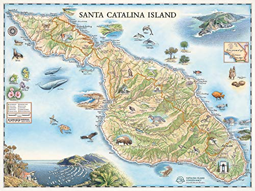 Xplorer Maps Santa Catalina Island Map Wall Art Poster - Authentic Hand Drawn Maps in Antique Style - Lithographic Print