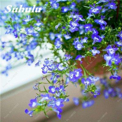 50 Pcs Arabis Alpina neige Graines de pointe extrême froid résistant jardin Bonsai Rare Belle plante et mur fleur Arabette 3
