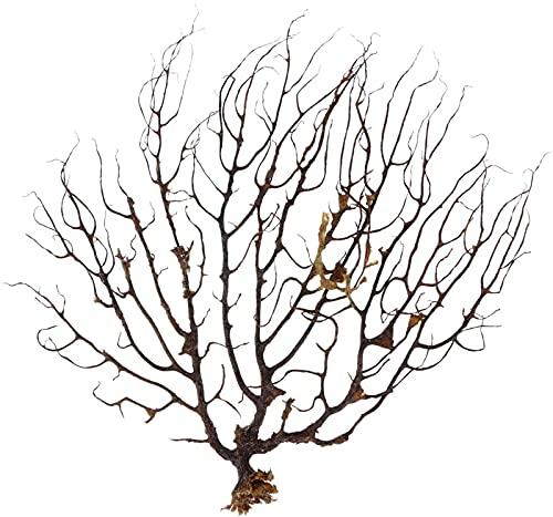 aipipl Ventilador del mar Negro, pecera, decoración de Acuario, Adorno de Coral Marino, Plantas de Acuario para decoración de peceras, Exquisita
