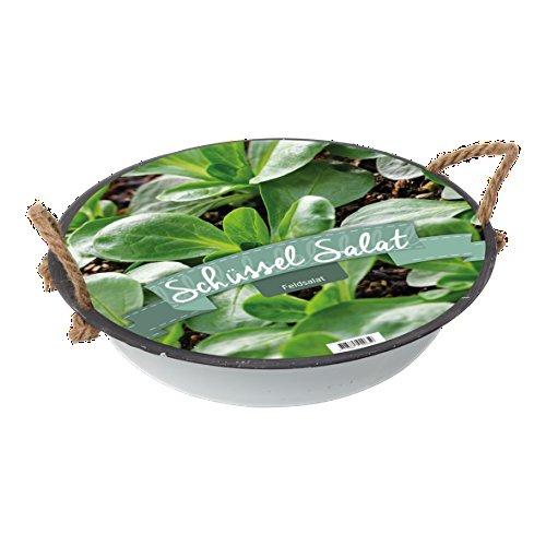 Pflanz-Set Salat Schüssel Feldsalat Gartengemüse von notrash2003®