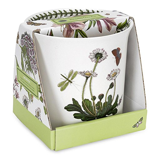 Portmeirion Botanic Garden Orchid Pot 6in by 6in