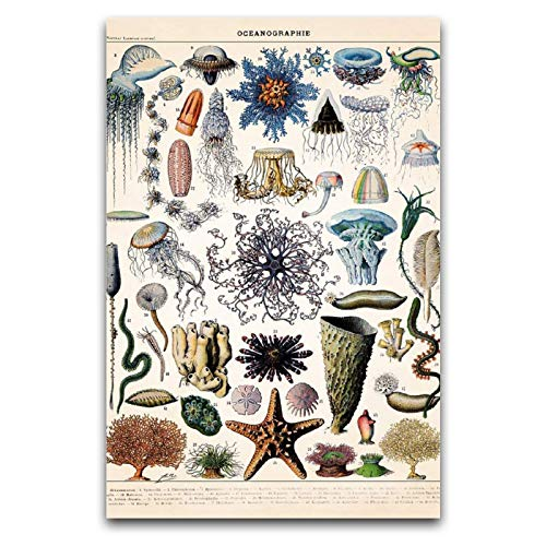 Sea Creatures Poster Sea Star Poster Wall Art For Living Room Decor Posters For Room Aesthetic 12'×18'(30*45cm)