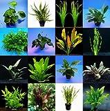 WFW wasserflora 5 Topf Barschsortiment Malawi - hochwertiges und Robustes Set