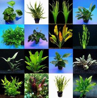 WFW wasserflora 10 Topf Barschsortiment Malawi - hochwertiges und Robustes Set