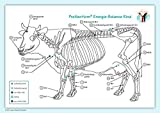Akupunktur-Tafel Rind/Kuh: PraNeoHom® Energiebalance durch Heilen mit Zeichen by Layena Bassols Rheinfelder (2012-10-17) - Layena Bassols Rheinfelder