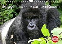Berggorillas - die sanften Riesen (Wandkalender 2022 DIN A4 quer): Berggorillas in ihrem natuerlichen Lebensraum (Geburtstagskalender, 14 Seiten )