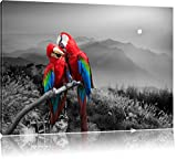 süße Papageien auf Ast schwarz/weiß Format: 120x80 auf