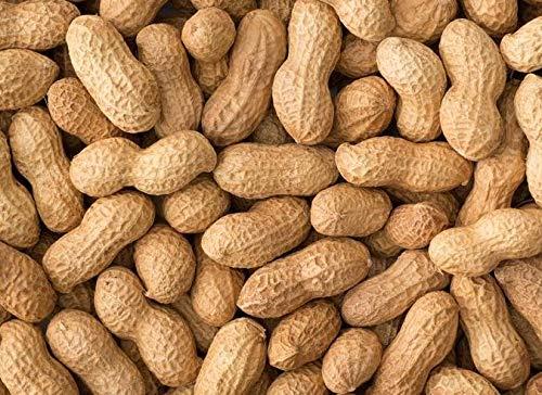 Peanut Seeds - Virginia Jumbo - Organic - 20+ Seeds - Glasgow's Goods