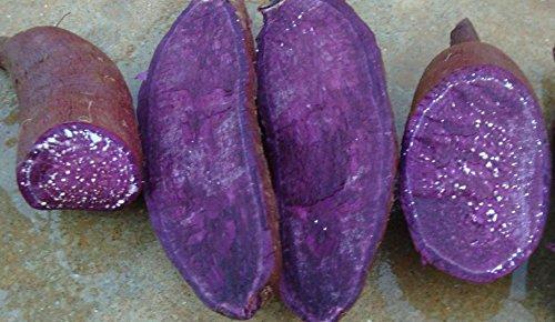 SVI Frische 50pcs Süßkartoffel Gemüsesamen für das Pflanzen Violet
