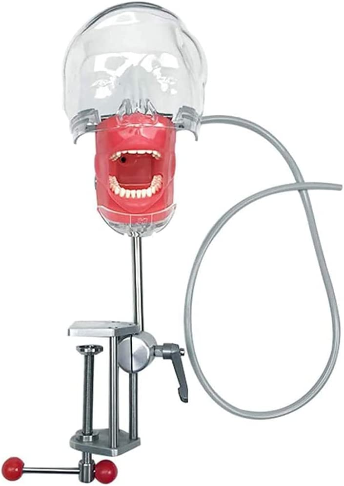 HGYYIO Dental Bargain sale Simulator Head Phantom OFFer Manikin