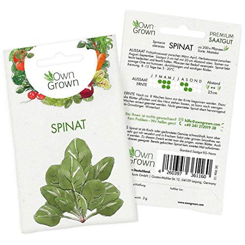 OwnGrown Premium Spinat Samen (Spinacia oleracea), Spinatsamen zum Anbauen, Saatgut für rund 200...
