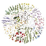 12Hojas Pegatinas Scrapbooking de Flores Plantas Manualidades Stickers Bullet Journal Album Fotos Agenda Pegatinas Autoadhesivas Decoración Álbumes de Recortes Calendarios Tarjetas Regalos Sobres