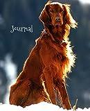 Journal: Red Setter
