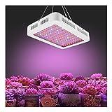 QFF Lampada per Piante LED pianta Chiara pianta coltiva Fill Light Lamp, 1000W High Power Full Spectrum, Inverno Stagione delle piogge Notte Home Istituto di Ricerca agricola Lampade da Coltivazione