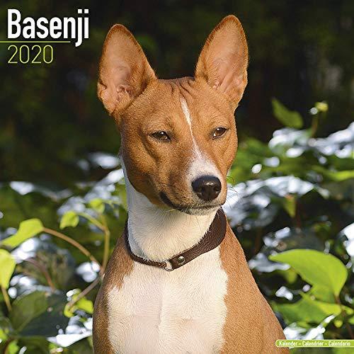Basenji Calendar 2020