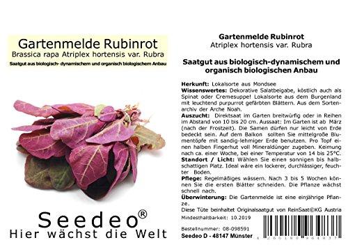 Seedeo® Gartenmelde rubinrot (Atriplex hortensis var. Rubra) 200 Samen BIO