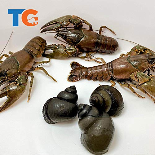 Toledo Goldfish Live Crayfish and Trapdoor Snail Combo for Ponds or Aquariums – USA Born and Raised – Live Arrival Guarantee (10 Count, 5 of Each)