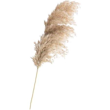 Color : 20pcs raw color, Size : M Fausses fleurs 20 Pcs Plantes S/éch/ées Herbe De Pampa Phragmites Communis Naturelles Couleur Fleur Mariage Bouquet De Fleurs De D/écoration Couleur Raw