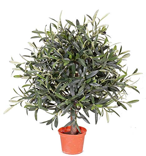 artplants.de Set de 6 x Olivo Artificial Wynona, Tronco Natural, Frutos, 50cm - Pack de oliveras...