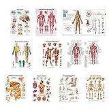 luosh Conjunto de póster anatómico, 10 Hojas Póster La anatomía del Cuerpo Humano para el análisis de la enseñanza, la consolidación de la Memoria