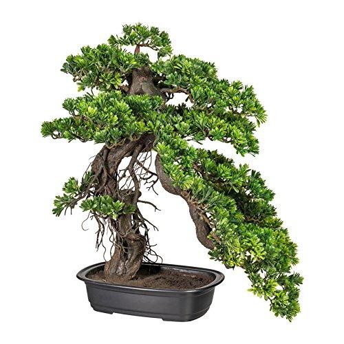 Kunstpflanze Bonsai Podocarpus in schwarzer Kunststoffschale, grün, ca. 65 x 50 cm