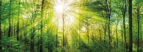 PICSonPAPER Poster Panorama Wald, 110 cm breit x 40 cm hoch, Dekoration, Kunstdruck, Wandbild, Fineartprint, Panorama Kunstdruck, Landschaft Bäume Wald, Premium Qualität