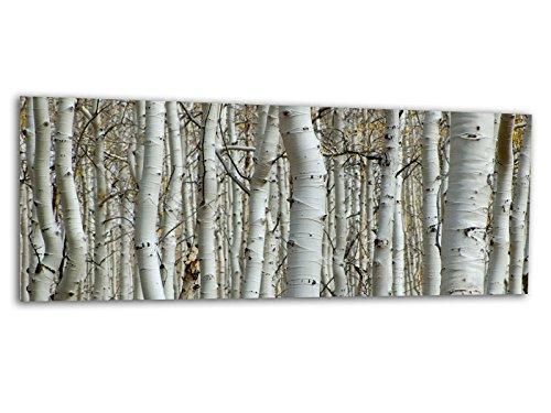 KD Dsign+ XXL Glasbild AG312500279 Mural BIRKENWALD Natur 125 x 50 cm/WANDBILD Deco Glass/Handmade