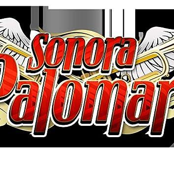 Palomar Party