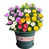 Fnho Balcón Primavera Flores,Perennes Plantas Semillas,Especies de Flores, Cuatro Estaciones Flor Viva fácil-1000 Granos