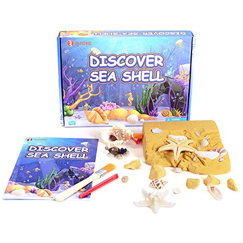 iSTONE Jewelry Excavation Kit 20 Natural Sea Shell Starfish Dig It Up Ocean Sea Animal Toys Dig Kits Great Science Kit for Kids