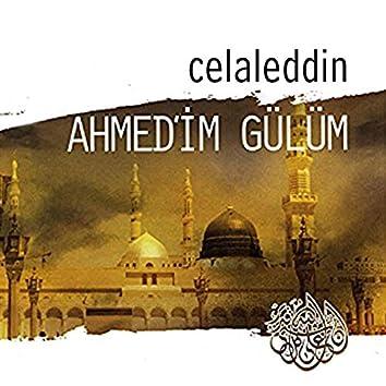 Ahmedim Gülüm
