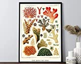 Antike Meereskoralle Poster, Great Barrier Reef Poster,