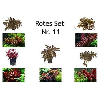 Tropica Pflanzen Set mit 5 roten Topf Pflanzen