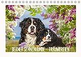Berner Sennenhunde - Träumereien (Tischkalender 2021 DIN A5 quer)