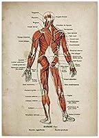 解剖学プリントキャンバスポスターセット医療スケルトン人体筋肉ヴィンテージポスター科学教育ウォールアートオフィス家の装飾Z40X60Cmフレームなし