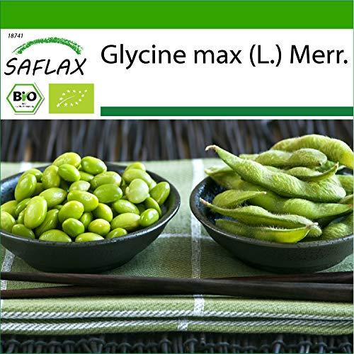 SAFLAX - BIO - Bohne - Edamame - 8 Samen - Mit keimfreiem Anzuchtsubstrat - Glycine