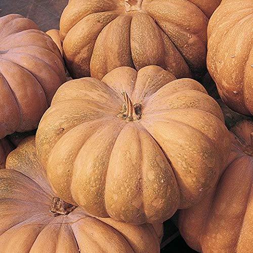 ZUCCA Musquee de Provence (Cucurbita moscata) - SEMI