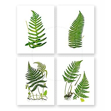 Fern Wall Art Decor Set of 4 Unframed Green Garden Nature Vintage Botanical Art Prints