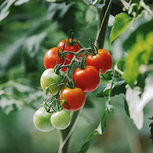 おもいろトマトのトマトジューストマト100%水・食塩・糖類等は一切不使用180ml×6本お歳暮お中元ギフト贈り物贈答品誕生日プレゼント内祝い食品業務用