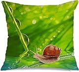 Funda de almohada Morning Ecology Leaf Dew On Spring Grass Animales Vida Silvestre Texturas poco profundas Springtime Animal Makro Cómoda funda de cojín para silla de coche Sofá Cama de 45x45 cm