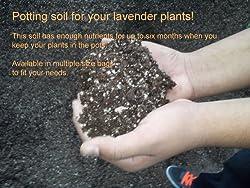 Buy Lavender Potting Soil Mix